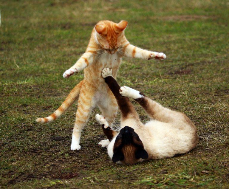 chat et jeu